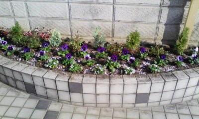 上桂のマンションの花壇の植替え