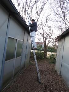 屋根に溜まった落ち葉撤去